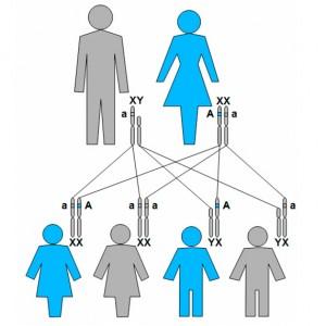 Herencia ligada a X dominante. Madre afectada.