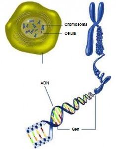 Resultado de imagen de Los genes